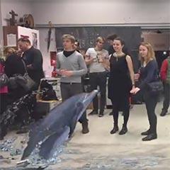 Illusion en réalité augmentée d'un dauphin sautant hors de l'eau